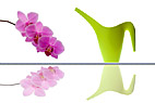 Vandkande og orkide - Modern watering can and orchid twig