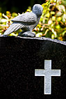 Fredsdue på gravsten - Dove of peace on top of black gravestone