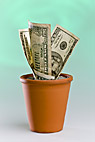 Dyrke amerikanske pengesedler i urtepot - Growing dollar notes in a flowerpot