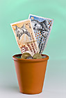 Dyrke kontanter i urtepot - Growing danish cash money in a flowerpot