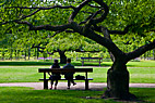 To på en bænk under træet - Two people have a rest on a bench under a tree